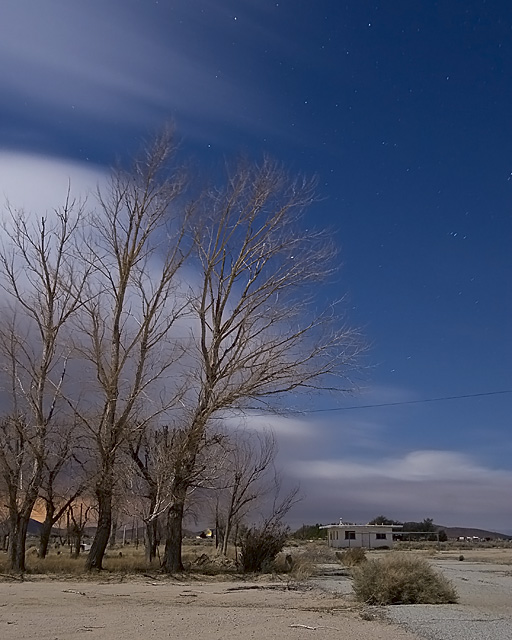 Bent Willows  :::::  The wind picks up intensity as the storm closes in.