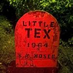 Succulent Little Tex  :::::