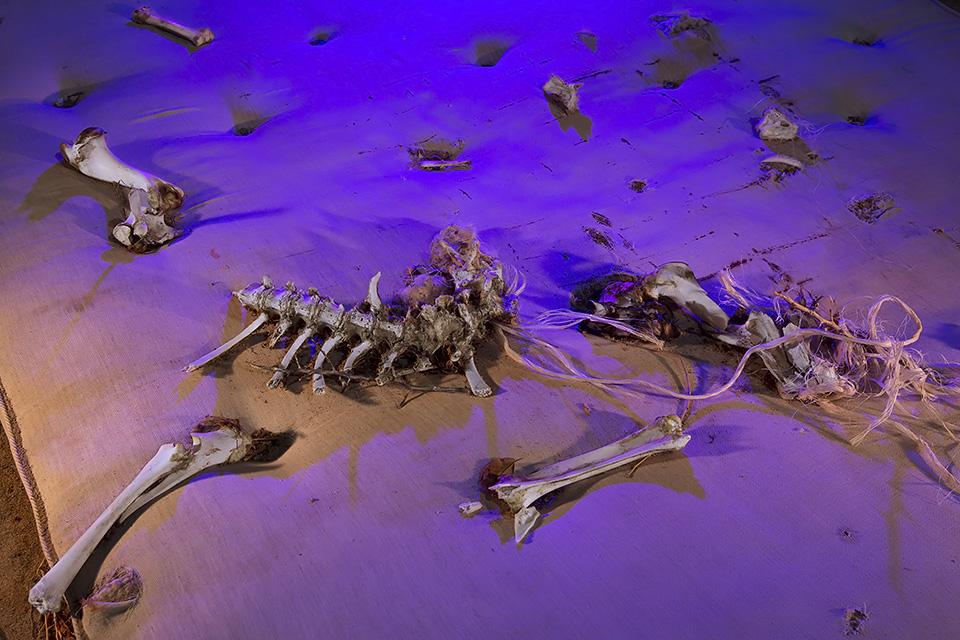 Purple Vertebrate  :::::  Antelope Valley, California